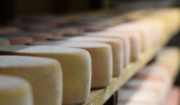 Vente directe de fromage de chèvre
