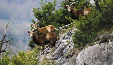 Les balades dans la Réserve Naturelle Régionale Pibeste-Aoulhet
